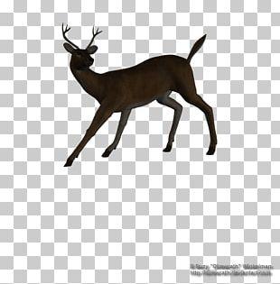 Reindeer White-tailed Deer Elk Antelope PNG