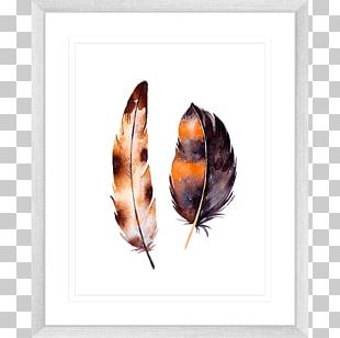 Feather White Color Frames PNG