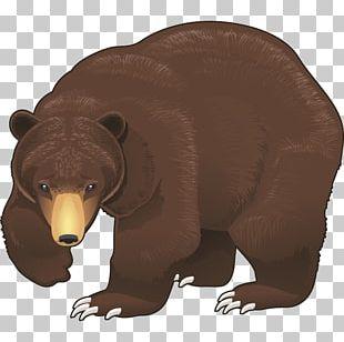 Brown Bear PNG