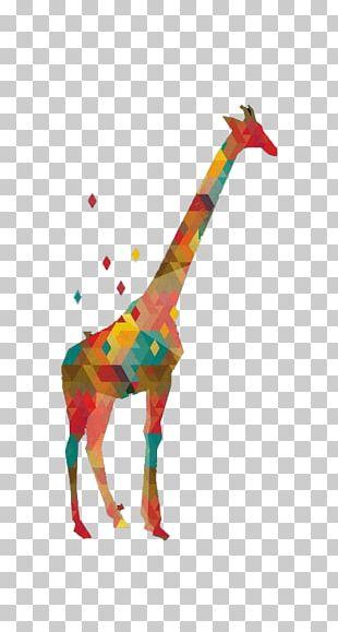 Northern Giraffe Graphic Design Illustration PNG