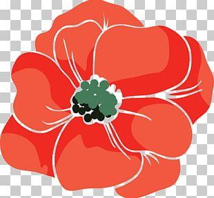 Beach Rose Red Poppy Euclidean PNG