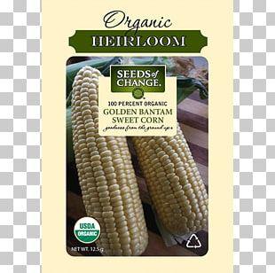 Sweet Corn Organic Food Popcorn Golden Bantam Corn Kernel PNG
