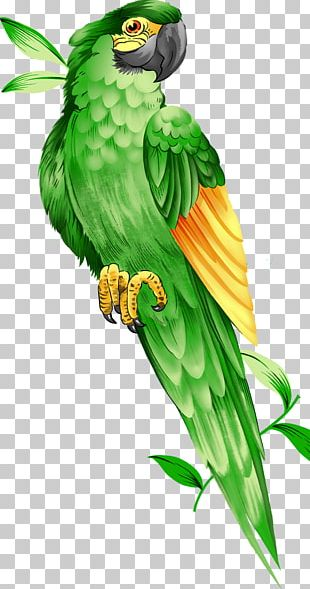 Amazon Parrot Bird Macaw Illustration PNG