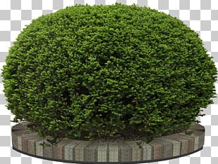 Garden Tree Flower PNG