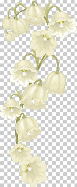 Moth Orchids Floral Design Cut Flowers Dendrobium PNG