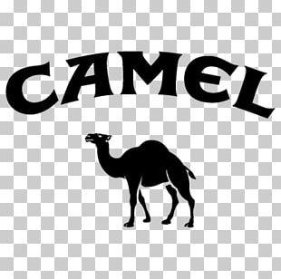 Camel Logo T-shirt Brand PNG