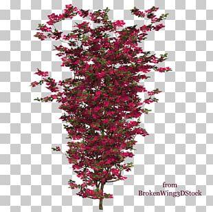 Bougainvillea Shrub Plant Tree Branch PNG