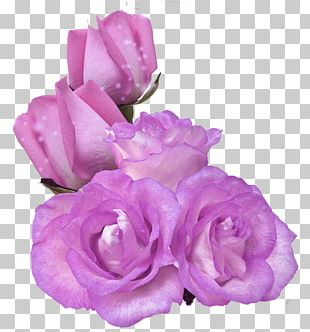Stock Photography Rose PNG
