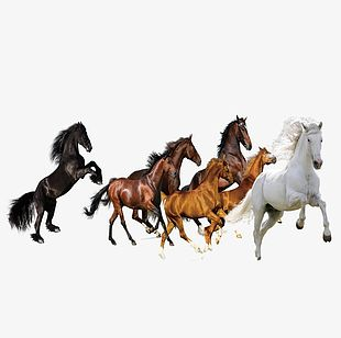 Figure Eight Horses PNG