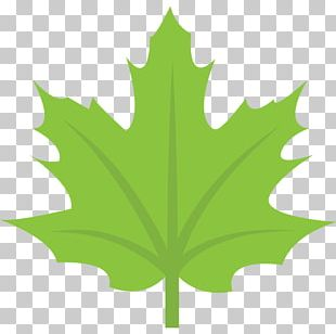 Maple Leaf Flag Of Canada Sugar Maple PNG