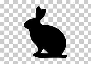 Domestic Rabbit Lionhead Rabbit Dutch Rabbit Holland Lop Flemish Giant Rabbit PNG