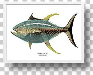 Mackerel Yellowfin Tuna Swordfish Art PNG