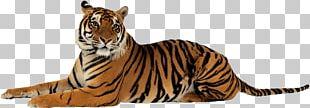 Jim Corbett National Park Lion Sumatran Tiger Project Tiger Felidae PNG