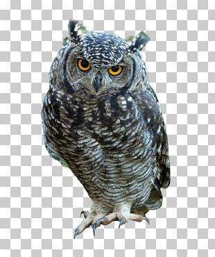 Great Horned Owl Bird Indian Eagle-owl Snowy Owl PNG
