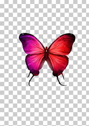 Butterflies And Moths Blue Monarch Butterfly Euclidean Illustration PNG