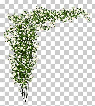 Rose Shrub PNG