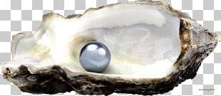 Seashell PNG