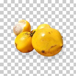 Lemon Vegetarian Cuisine Food La Quinta Inns & Suites Vegetarianism PNG