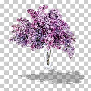 Lilac Lavender PNG