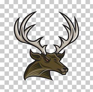 Elk Reindeer Wildlife PNG