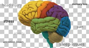 Human Brain Neuron Research Cognitive Training PNG