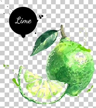 Lemon-lime Drink Lemon-lime Drink Key Lime Illustration PNG