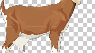 Golden Guernsey Boer Goat Sheep Russian White Goat PNG