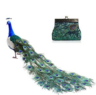 Bird Peafowl Feather Tail Parrot PNG