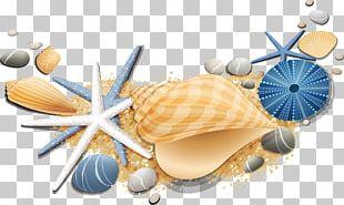 Seashell Starfish Conch PNG