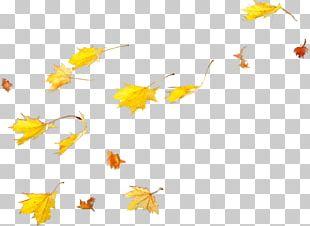 Petal Maple Leaf PNG
