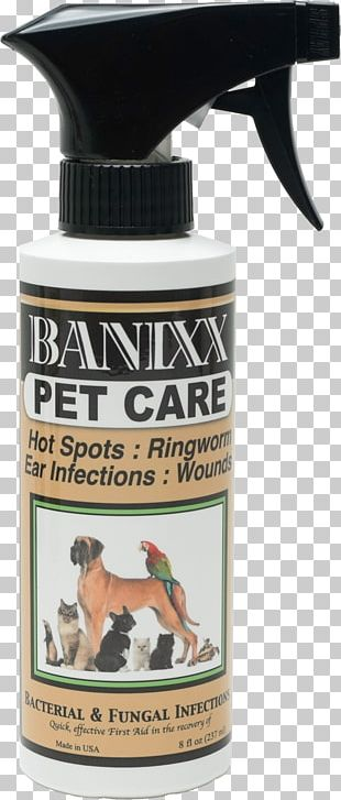 Cat Dog Kitten Horse Pyotraumatic Dermatitis PNG