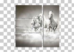 Arabian Horse Wall Decal Paper Decorative Arts PNG