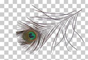 Asiatic Peafowl Feather Bird PNG