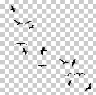 Bird Flight Drawing Silhouette PNG