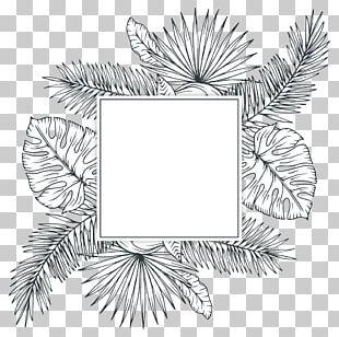 Tropics Plant Sketch PNG