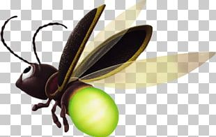Butterfly Insect Pollinator Tinker Bell Arthropod PNG
