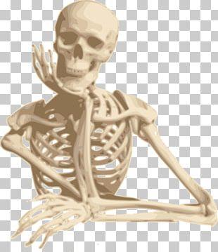 Human Skeleton Skull PNG