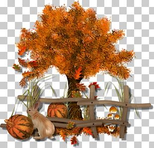 Autumn Leaf Color Tree Autumn Leaf Color PNG