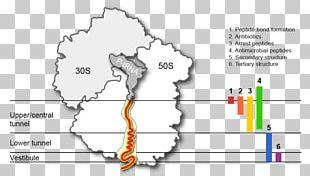 Line Diagram Angle PNG