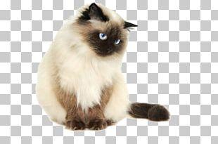 Himalayan Cat Siamese Cat Persian Cat Kitten Sphynx Cat PNG