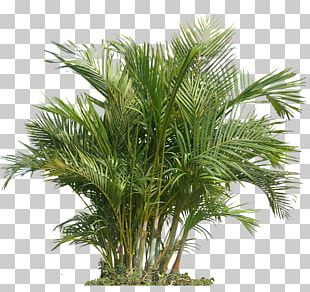 Houseplant Indoor Air Quality Gardening Health PNG