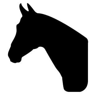 American Quarter Horse Arabian Horse Silhouette PNG