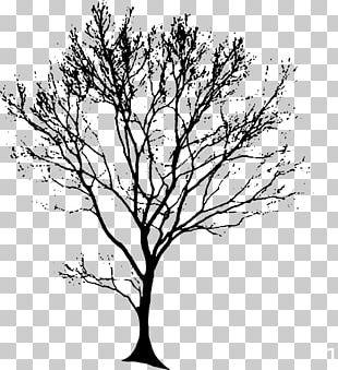 Drawing Oak Tree PNG
