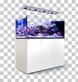 Red Sea Reef Aquarium Coral Reef Aquariums PNG