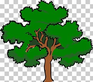 Southern Live Oak Tree PNG