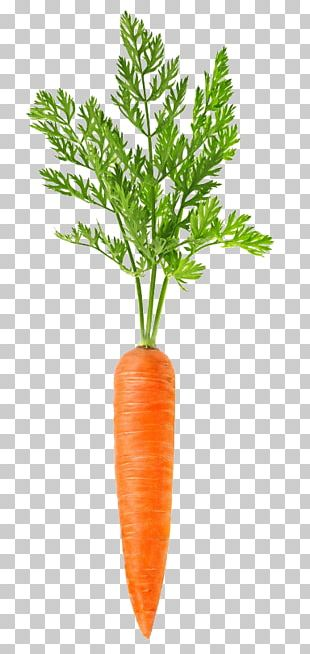 Carrot Vegetable Food PNG