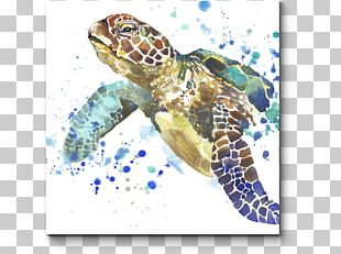 Sea Turtle Stock Photography Watercolor Painting PNG