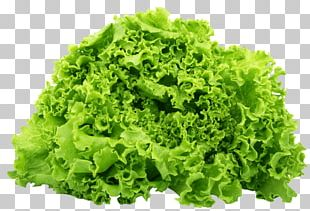 Lettuce Sandwich BLT Romaine Lettuce Salad Butterhead Lettuce PNG
