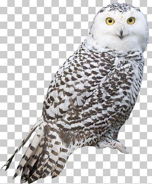 Snowy Owl Bird Arctic Fox PNG