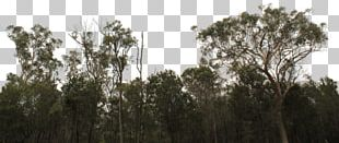 Tree Line Shrub Lumber Forest PNG